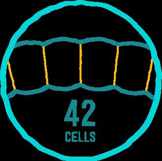 Nombre de cellules