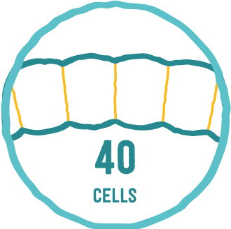Number of cells